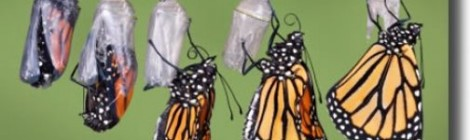 Monarchs, Menarche, and Menopause