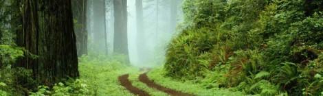 The Humble Path