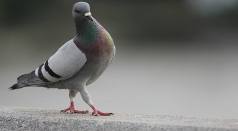 Pigeons, Poses, and (Self) Parenting