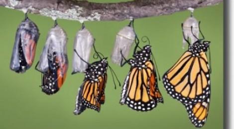 Monarchs, Menarche, and Menopause