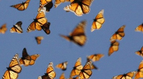 Herding Cats and Butterflies
