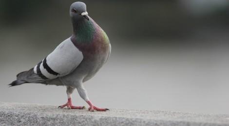 Pigeons, Poses, and (Self) Parenting