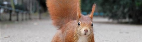 Don't Be Squirrelly